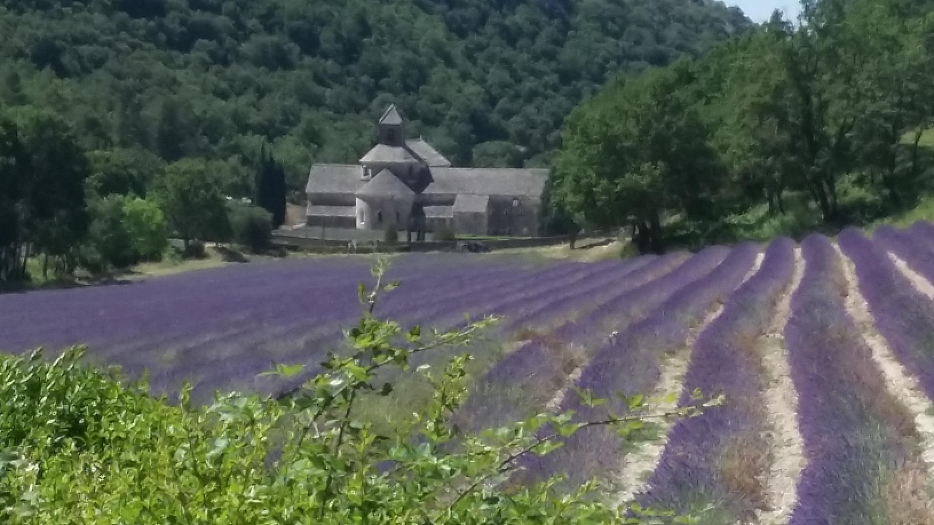 L'Abbaye de Sénanque